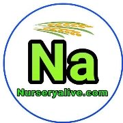Logo of Nursery Alive