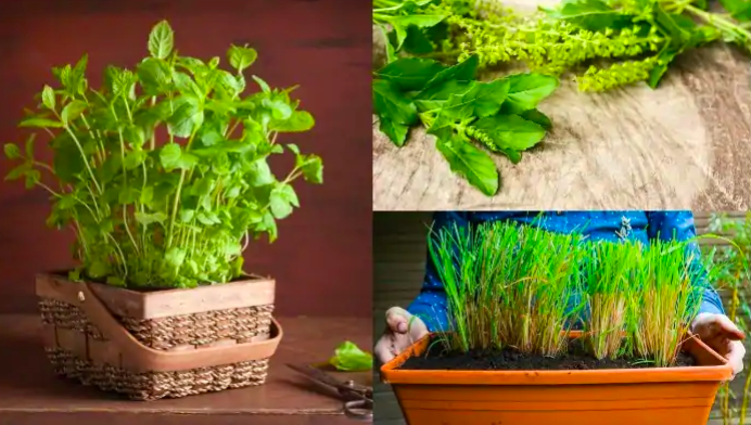 Grow Medicinal Herbs in your Kitchen or Patio