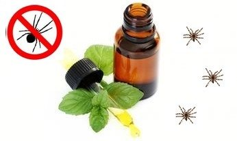 Diy Essential Oil Room Fresheners That Act As Insect