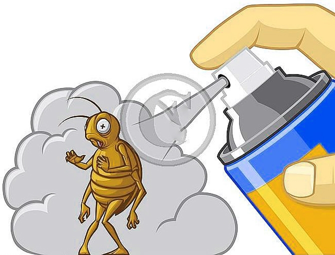 DIY - Get Rid Of Bed Bugs Forever! - HomeTriangle